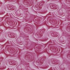 roses 50cm